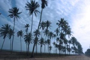 une plage à Cotonou
