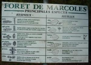 guide des plantes de la forêt de Marcoles