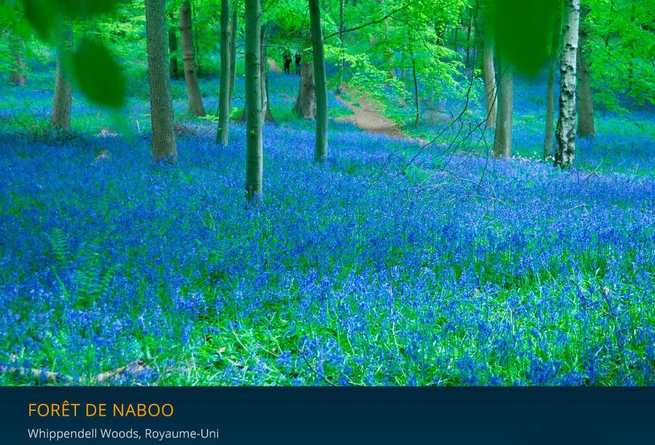Forêt de Whippendell, alias forêt de Naboo