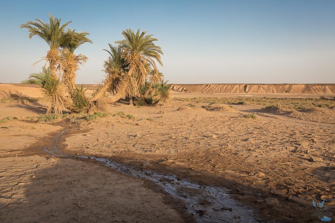 Oasis désert